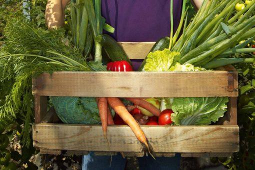 De ce este indicat sa cultivati legume?